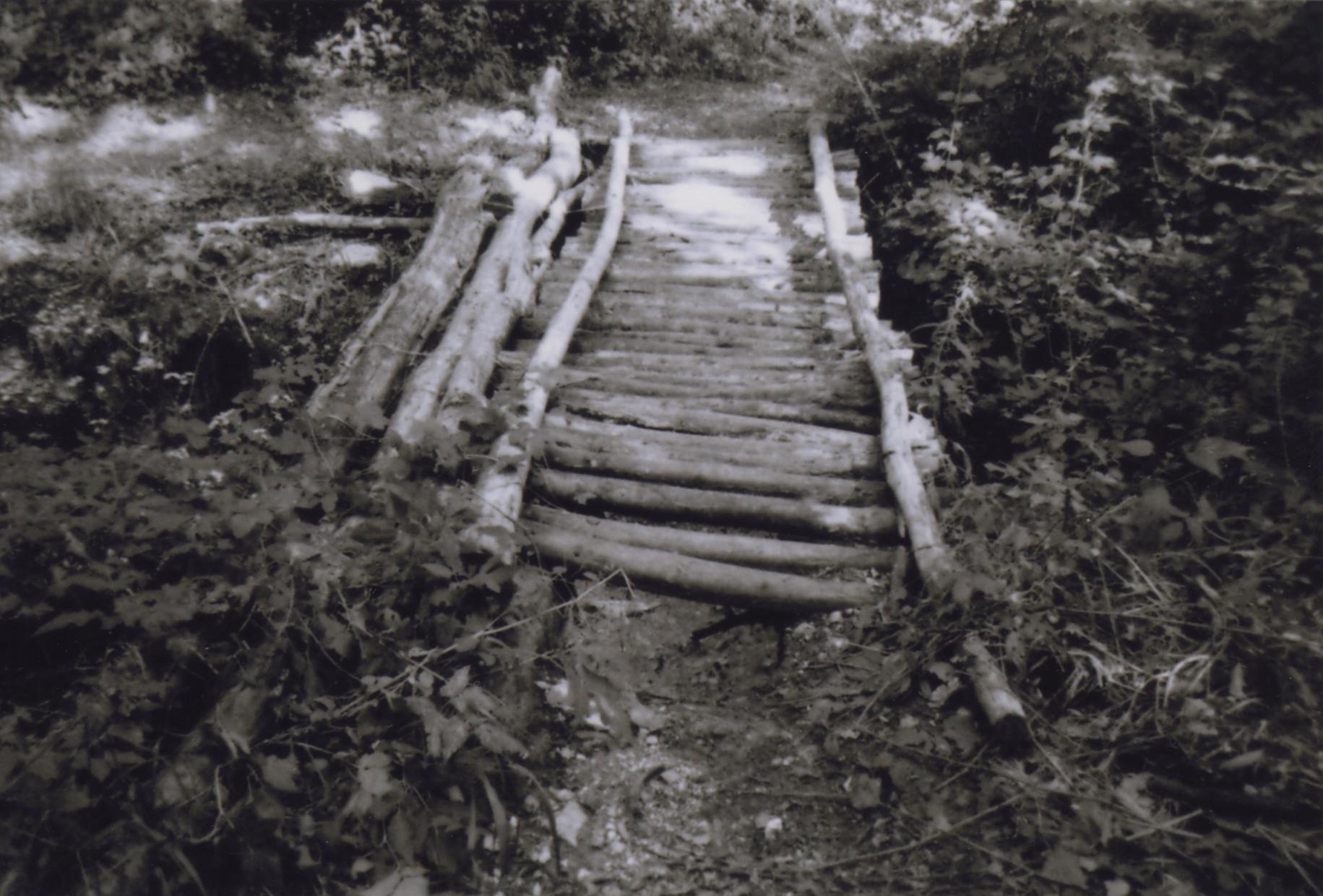 , art work, photo archive, wilderness, artista contemporaneo, visual artist