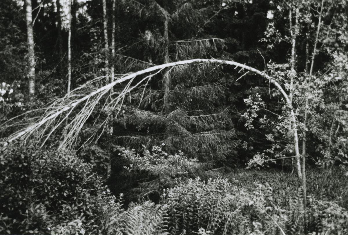 Daniele Girardi, foto archivio, fotografia contemporanea, opere, art work, photo archive, wilderness, artista contemporaneo, visual artist