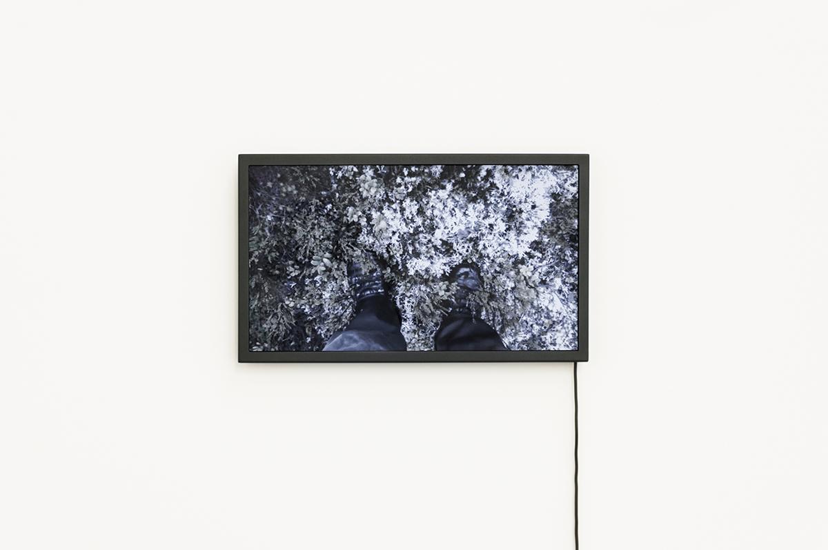 Daniele Girardi, Cronache Selvatiche, installazione, video, fotografia